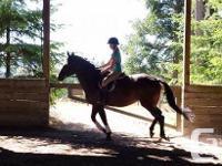 Northern Gem, a registered Canadian Warmblood mare (