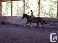 North Gem, a signed up Canadian Warmblood mare