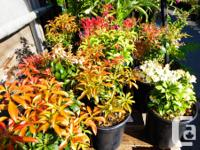 Michell Valley Plants has a great selection of deer for sale  British Columbia
