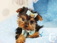 �Playing is my favorite! I�m an active puppy that